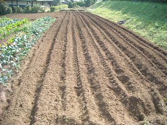 今日耕した場所