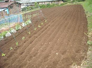 玉ねぎがあった所を耕したんよ